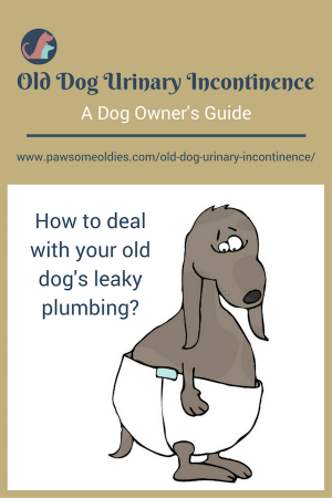 Old Dog Urinary Incontinence | Causes and Natural Remedies