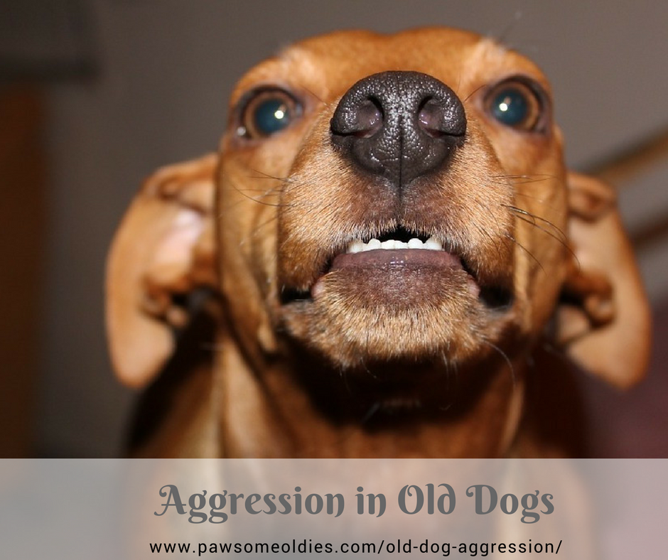 Old Dog Aggression