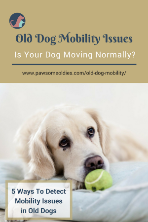 Old Dog Mobility Issues | How to Detect Pain and Joint Problems in Dogs