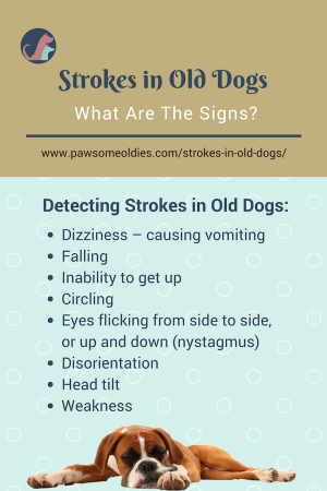 Dogs Strokes Signs And Symptoms