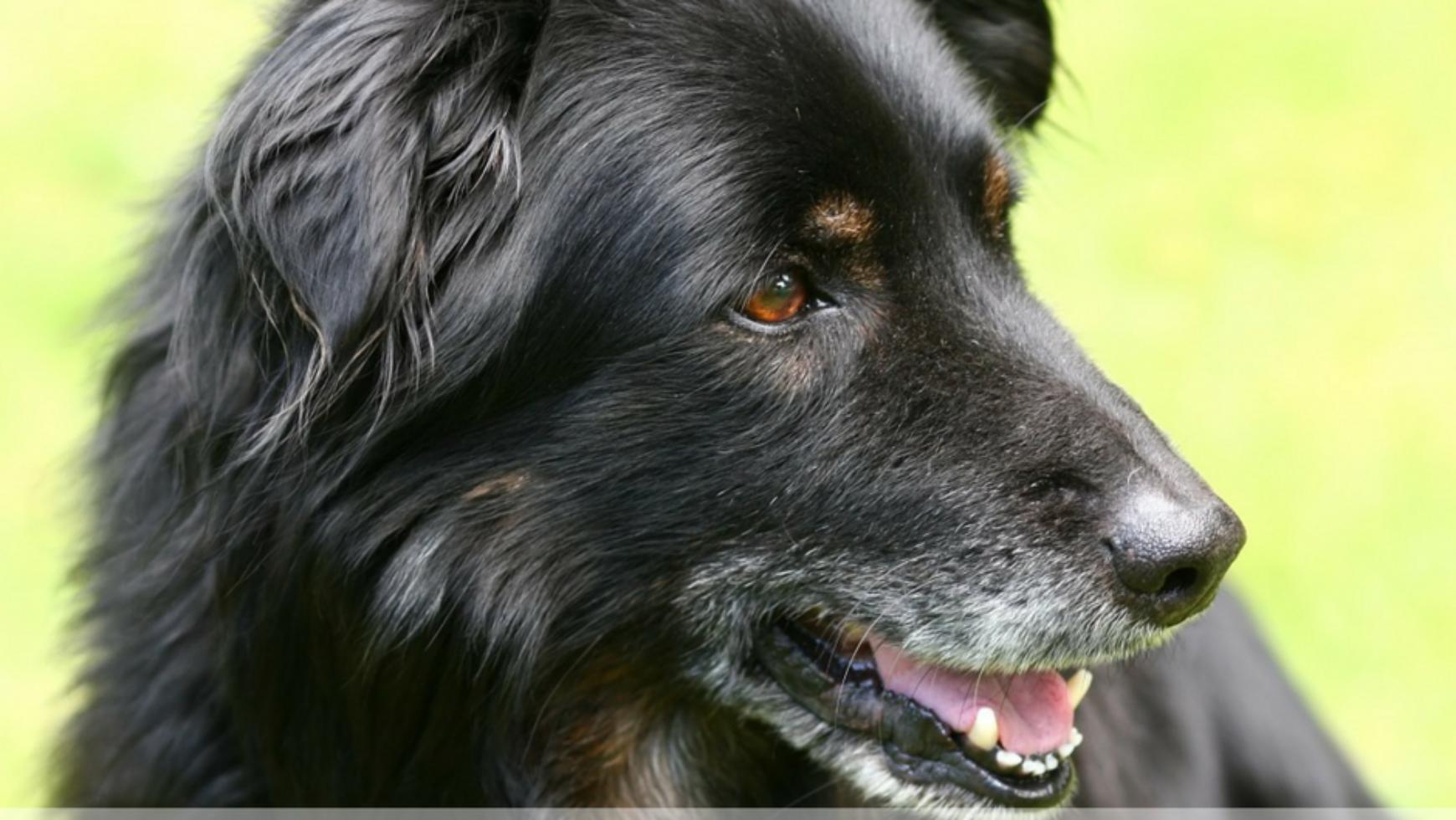 Old Dog Flatulence