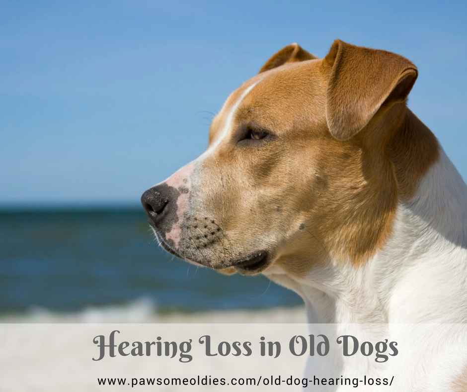 Old Dog Hearing Loss