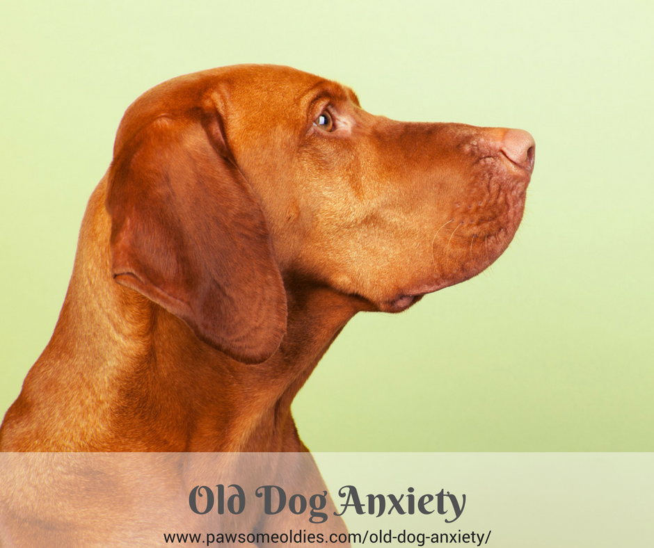 Old Dog Anxiety