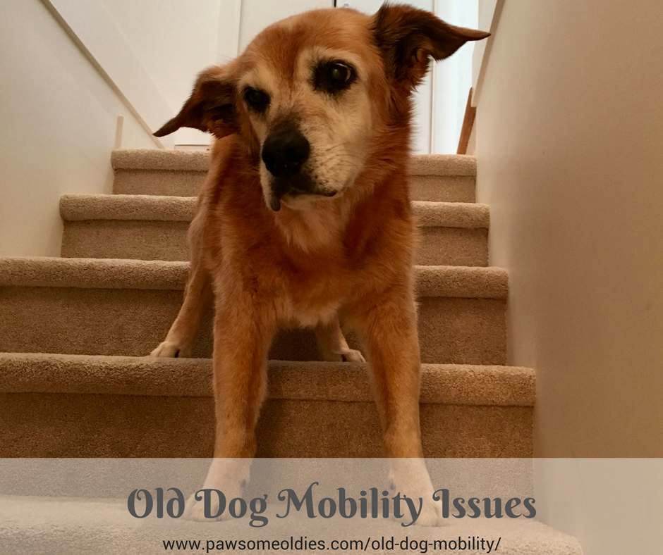 Old Dog Mobility Issues