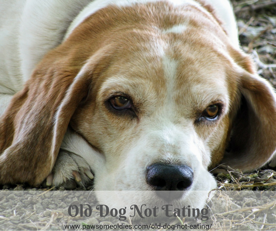 Old Dog Not Eating