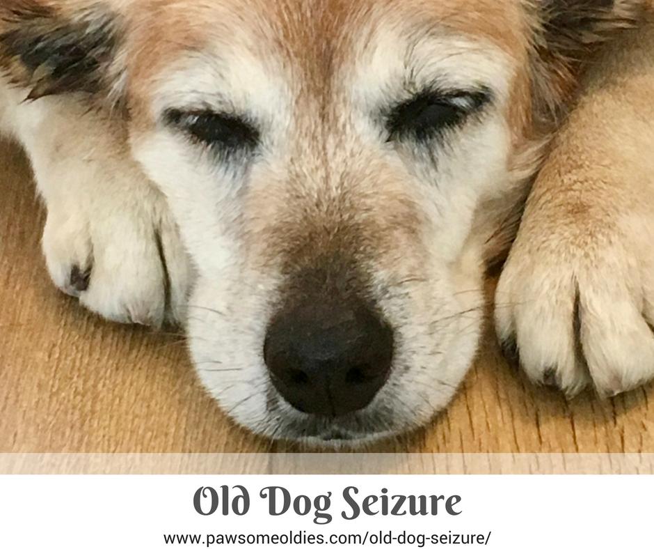 Old Dog Seizure