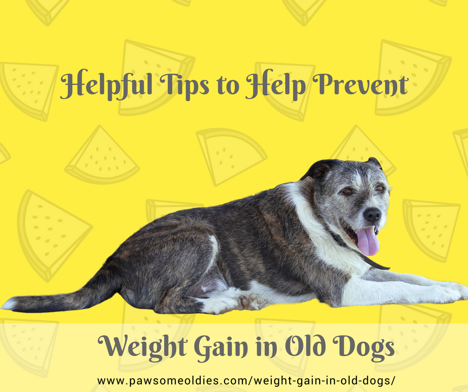 Weight Gain in Old Dogs