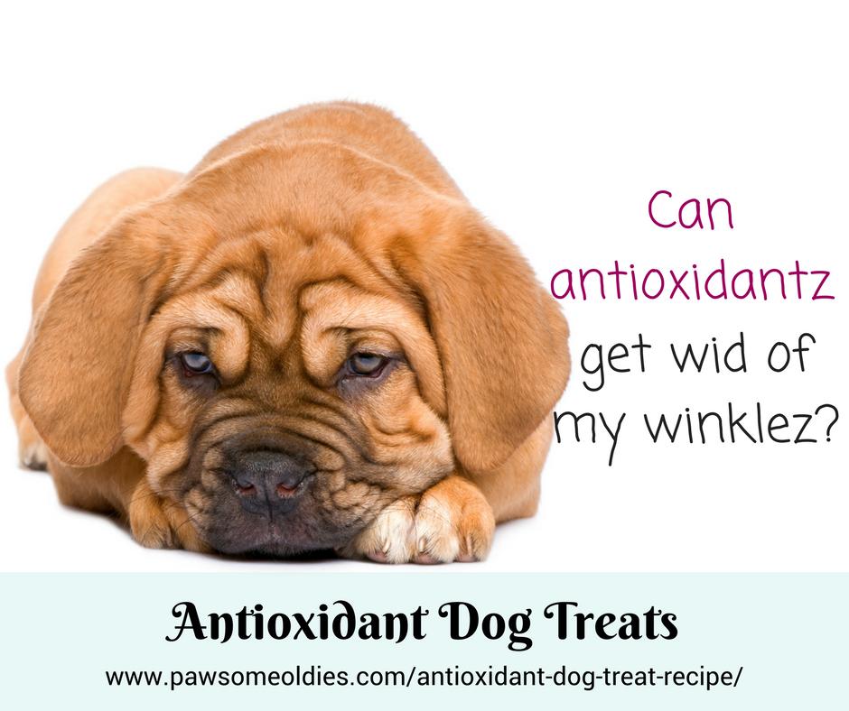 Antioxidant Dog Treat Recipe