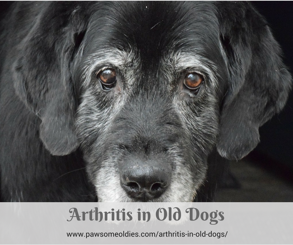 Arthritis in Old Dogs