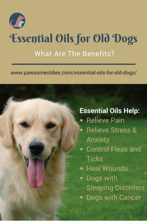 Essential Oils For Old Dogs How To Use Eos Safely On Older Dogs