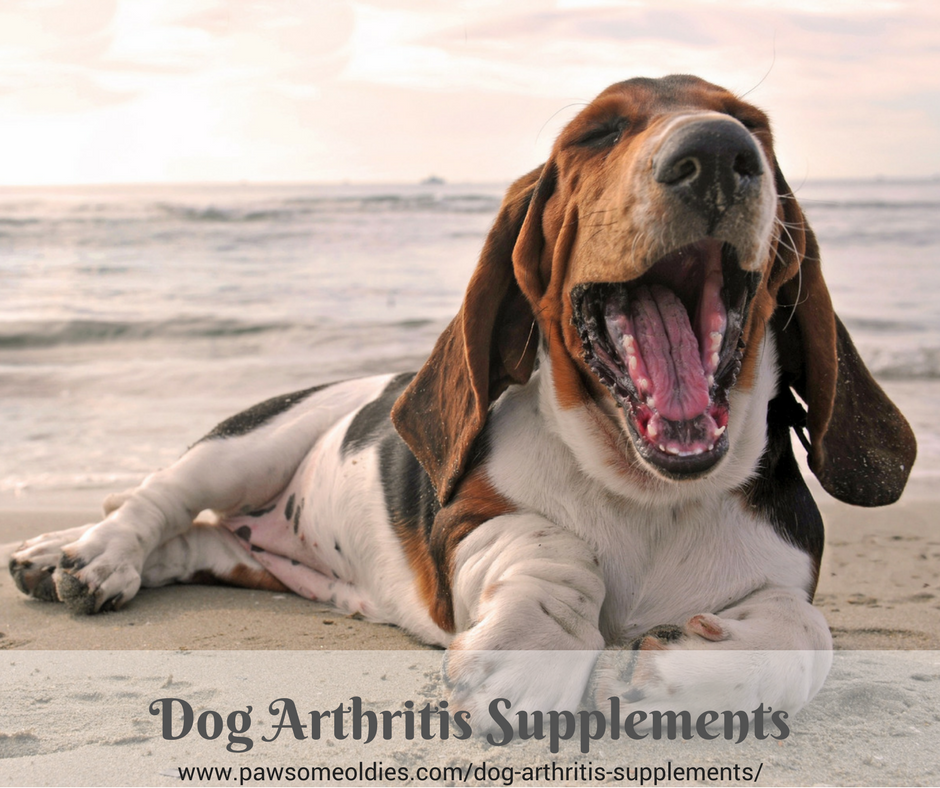 Dog Arthritis Supplements