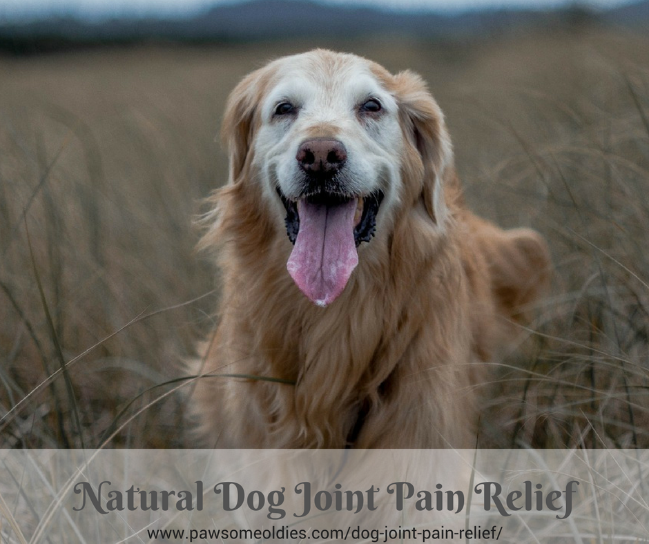 Natural Dog Joint Pain Relief