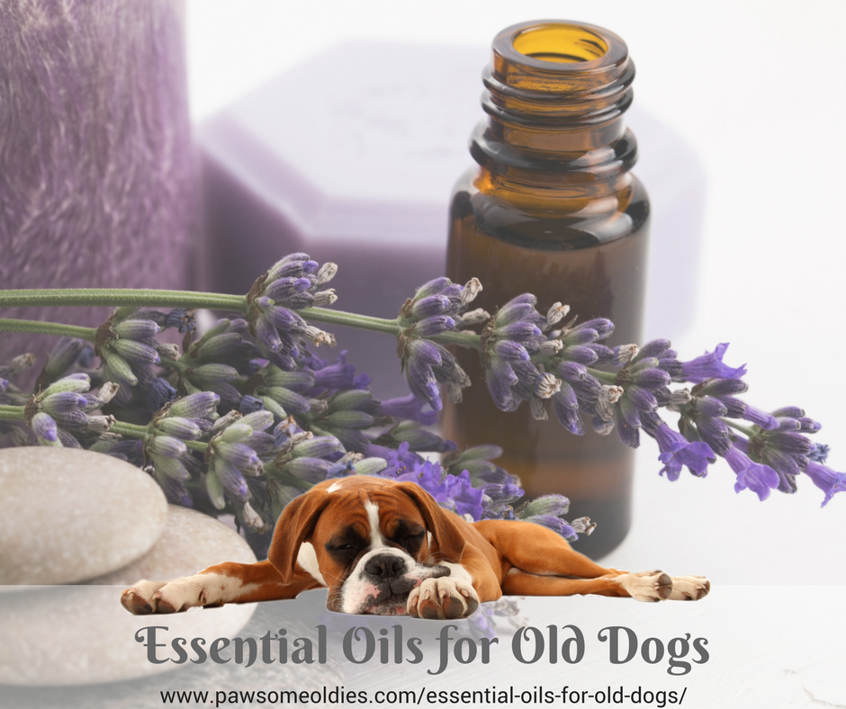 Essential Oils for Old Dogs