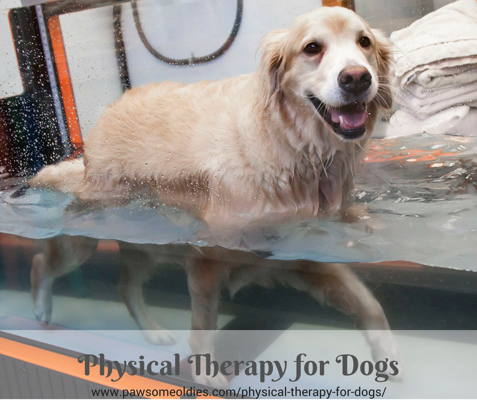 Physical Therapy for Dogs with Arthritis