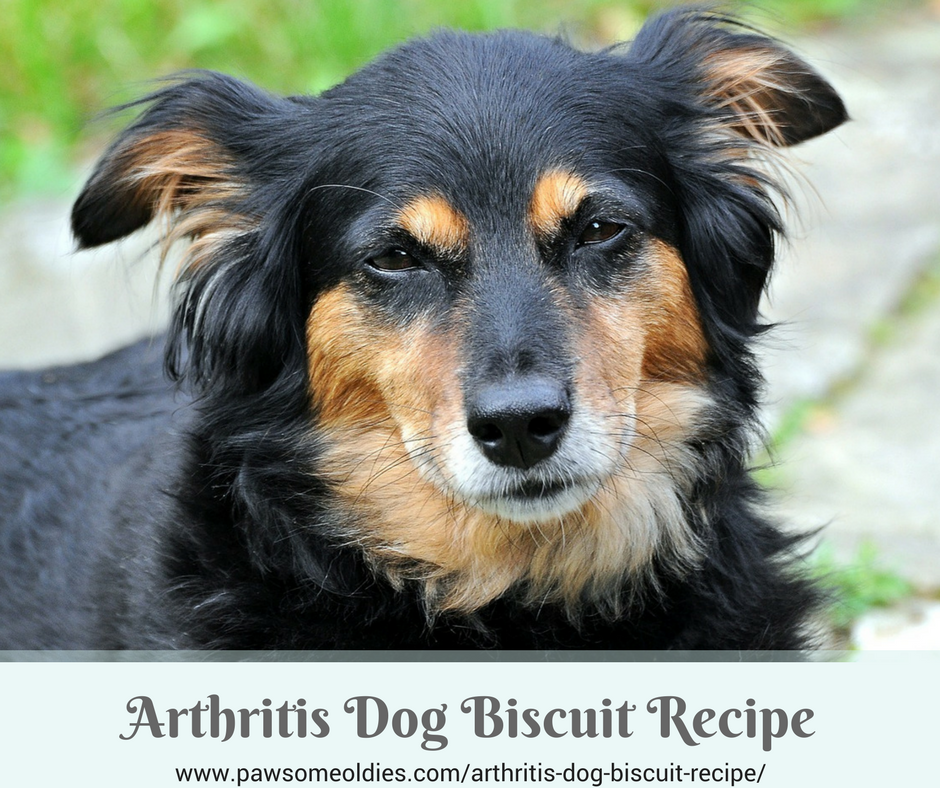 Arthritis Dog Biscuit Recipe