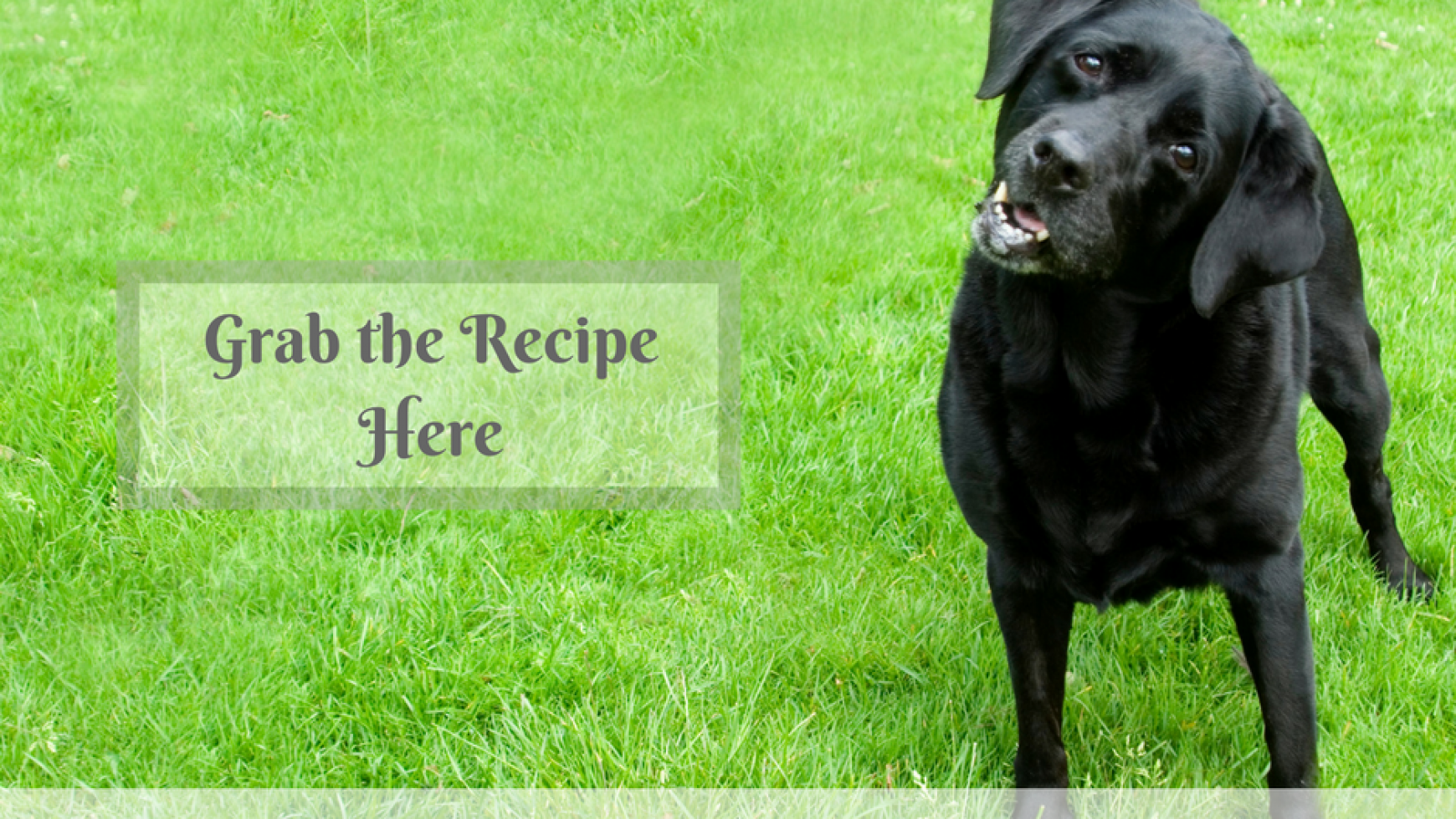 Calming Dog Biscuit Recipe