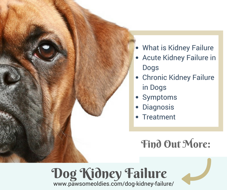 Kidney Failure In Dogs Home Remedies