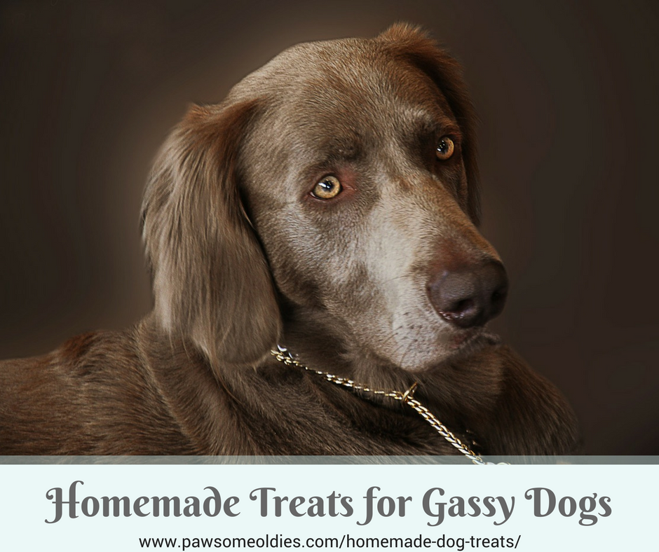 Homemade Dog Treats for Gassy Dogs