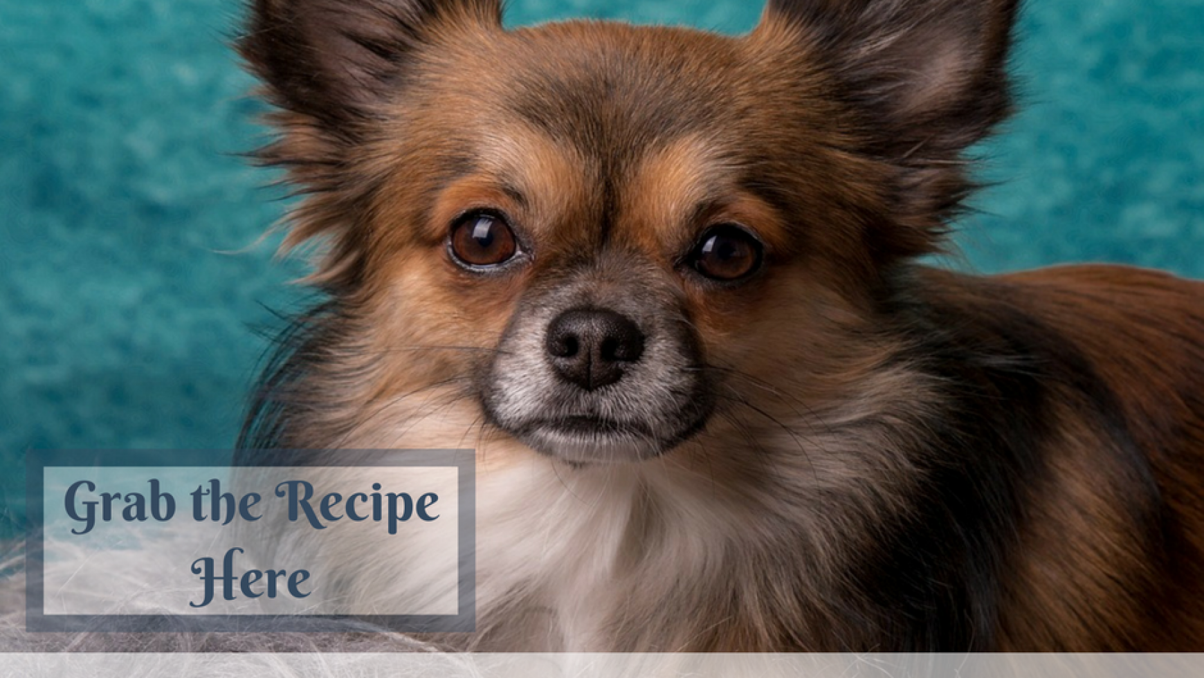 Lignan Treat Recipe for Dogs with Cushing's