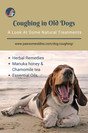 Natural Remedies For Wheezing In Dogs
