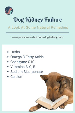 Dog Kidney Diet And Natural Remedies For Dogs With Crf Pawsome Oldies