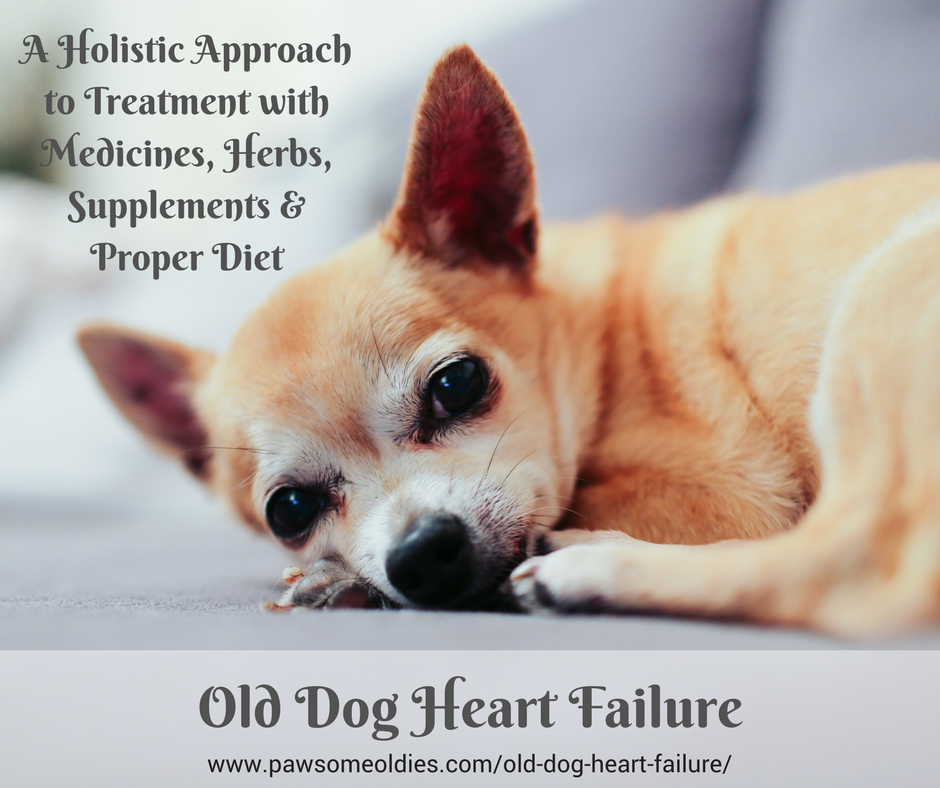 Old Dog Heart Failure