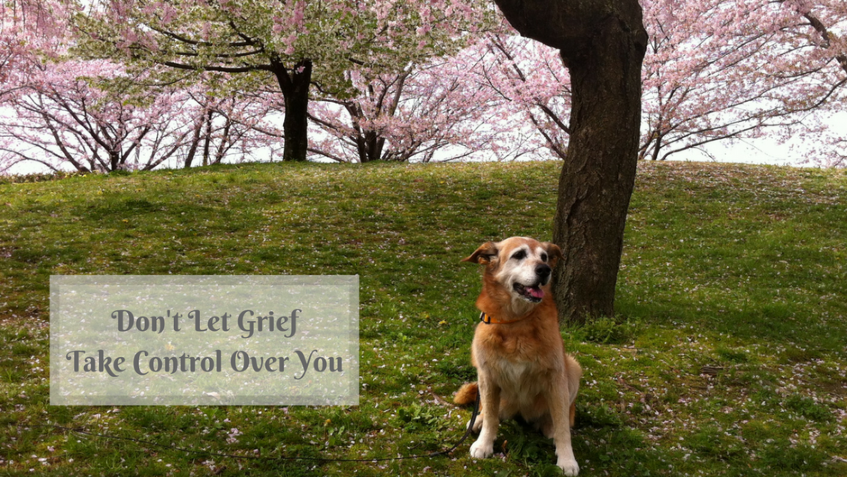Pet Loss Grief