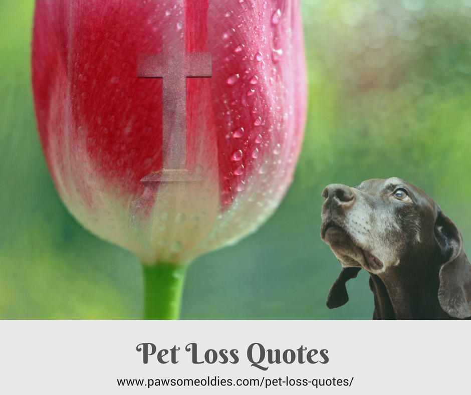 Pet Loss Quotes To Help You Through Grief Of Losing Your Dog Cool Dog Loss Quotes