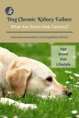 Dog Kidney Failure A Guide To Acute Chronic Kidney Failure In