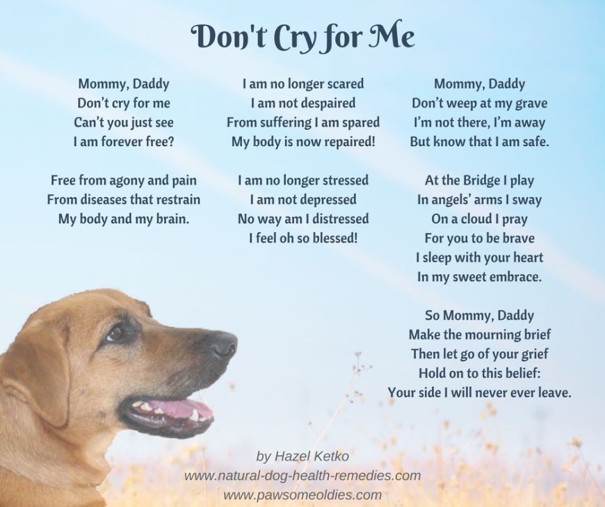 Pet Loss Poems Celebrating The Love