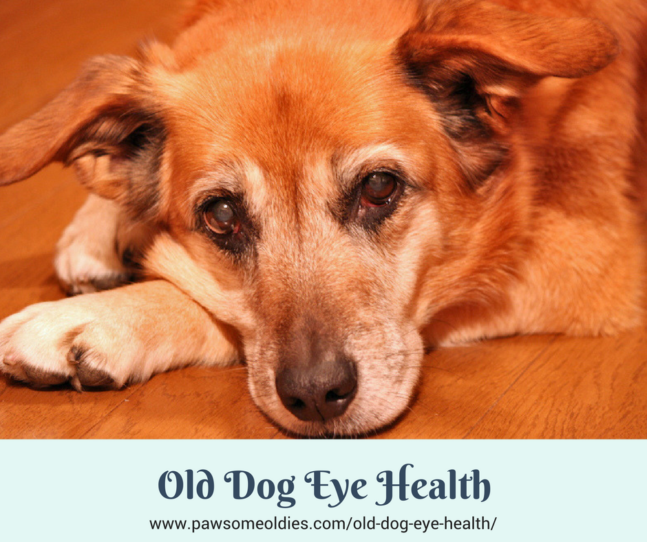 Old Dog Eye Health
