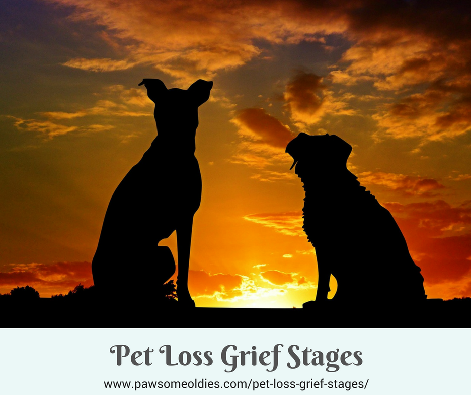 Pet Loss Grief Stages