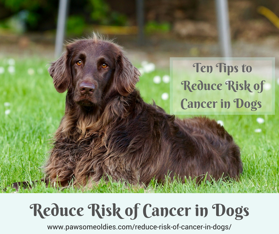 Reduce Risk of Cancer in Dogs