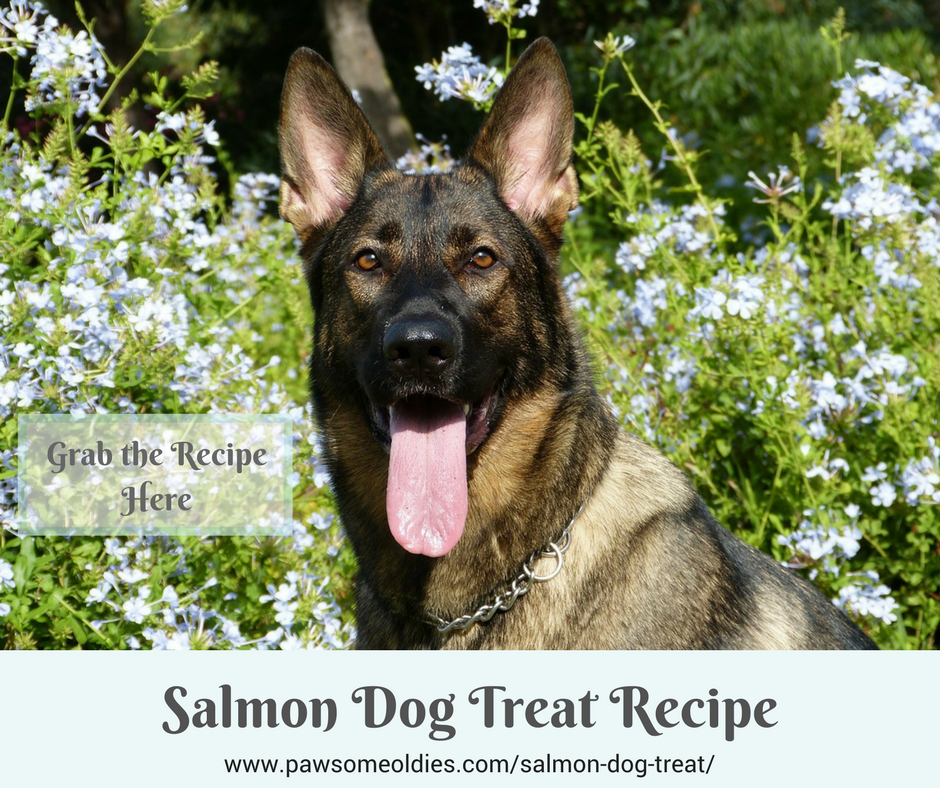 Salmon Dog Treat Recipe