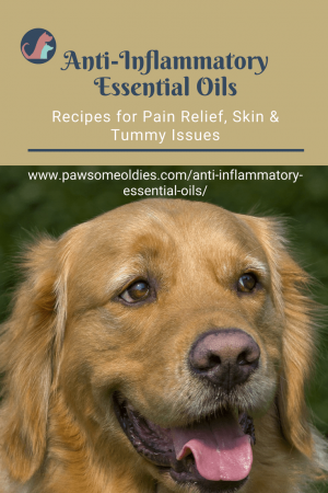 Anti-Inflammatory Essential Oils for Dogs | PawsomeOldies com
