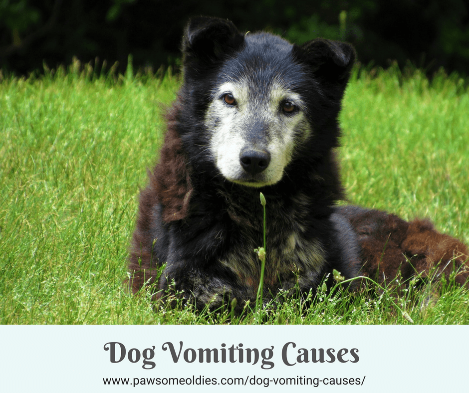 Dog Vomiting Causes